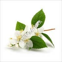 Jasminum Auriculatum Absolute Oil