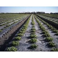 Agricultural Farms Mulch Film
