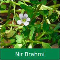 Nir Brahmi Dry Extract
