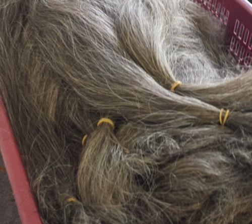 Gray hair temple hair