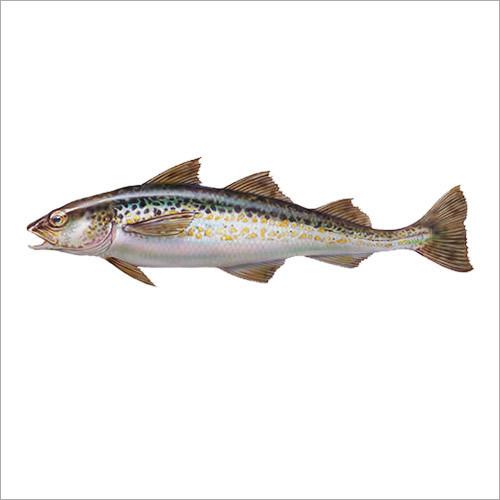 Alaska Pollock Fish