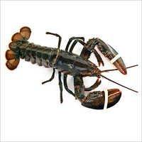 Lobster Crab