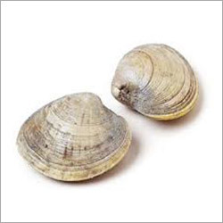 Clam Seafood