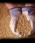 Soil & Water Probiotics