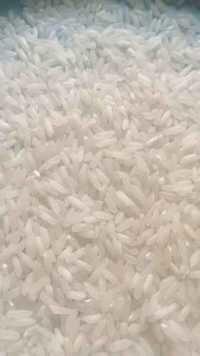 IR 8 Rice
