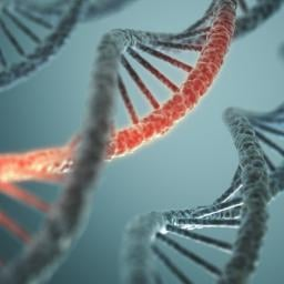 DNA(Paternity,Maternal,Ancestry) Testing From Biological Fluids