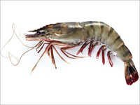 Black Tiger Shrimp