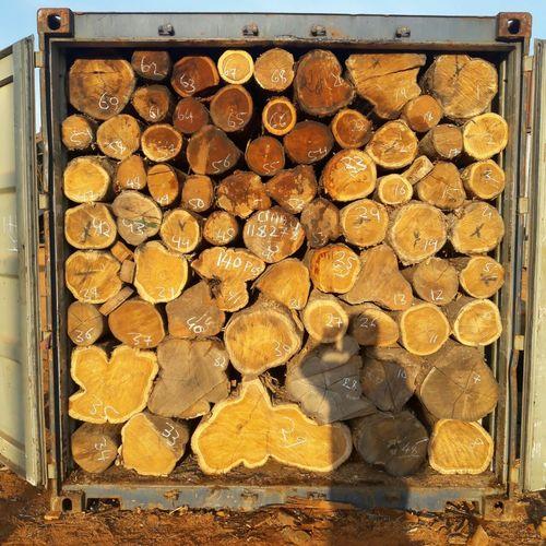 Sudan Teak Round Logs