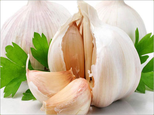 White Garlic Bulb