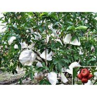 Fruit Protection Non Woven Cover