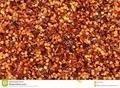 Chili Seeds