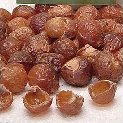 PKM1 Moringa Seeds