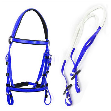 Halter and Bridle