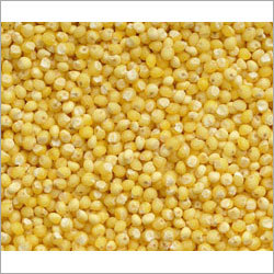 Indian Yellow Millet