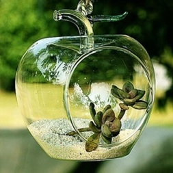 Glass and Planter