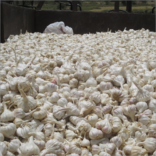 Dehydrate Garlic Cloves