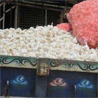 Raw White Garlic