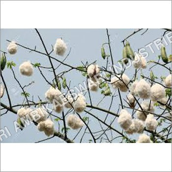 1 White Silk-Cotton