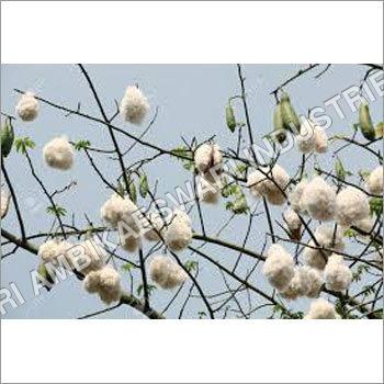 Kapok Cotton
