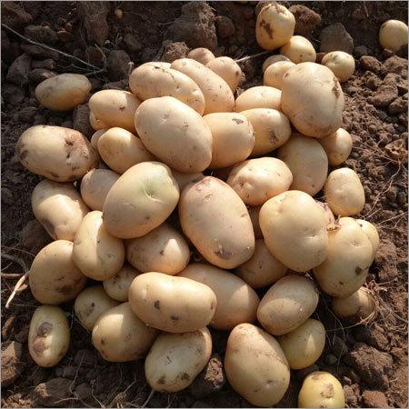 Fresh Table Potato