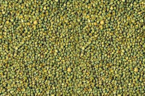Green Millets