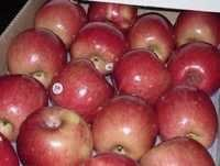Fuji Apples At Best Competitive