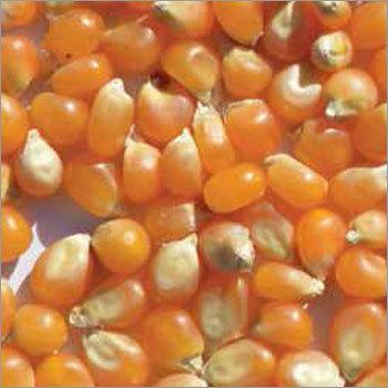 Popcorn Butterfly Type