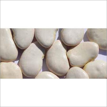 White Lima Beans