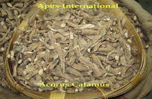 Acorus Calamus Powder