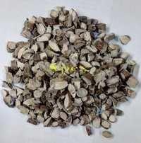 Acorus Calamus Small