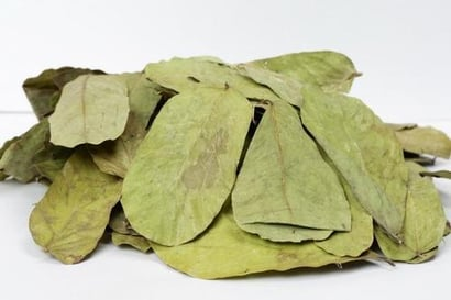 Cassia Alata Leaves Certifications: Iso