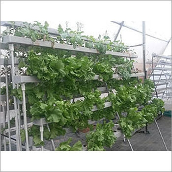 Commercial NFT 300 Plants