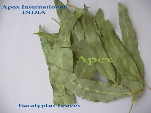 Nilgiri Leaves