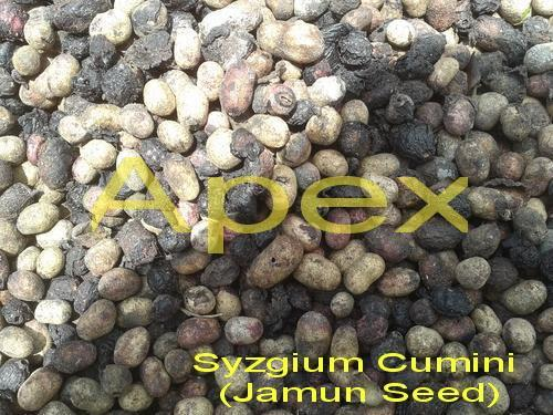 Black Plum Seeds Powder