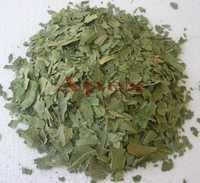 Azardiractha Indica