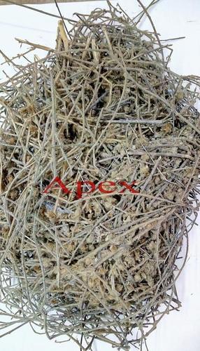 Aloeweed