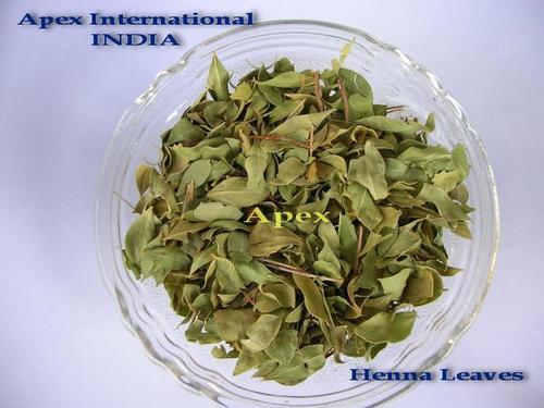 Lawsonia Inermis Leaves