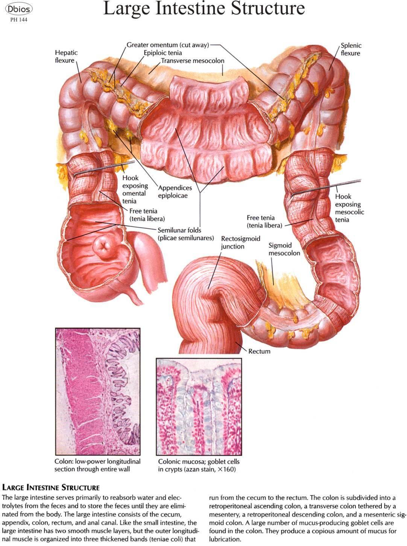 Rectosigmoid junction anatomy 9422408 - follow4more.info
