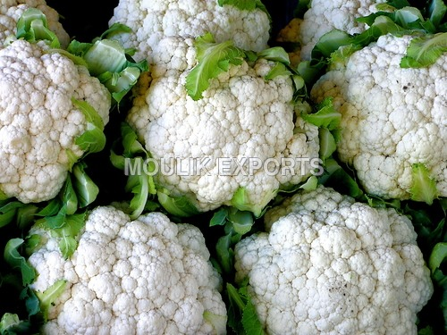 Fresh Cauli Flower