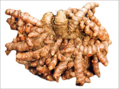 Hybrid Turmeric Seeds