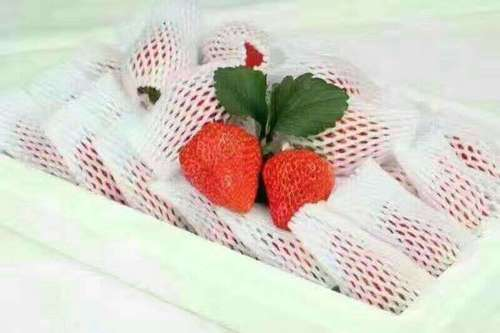 Strawberry EPE Fruit Foam Net