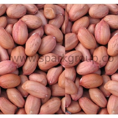 Indian Peanut / Groundnuts