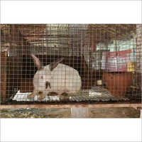 Breeding Rabbit