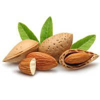 Bitter Almond Oil Bulk
