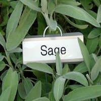 Clary Sage Oil Bulk