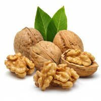 Walnut Oil Bulk