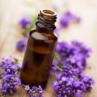 Lavender Oil Bulk