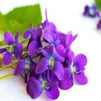 Violet Oil Bulk