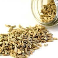 Fennel Oil Bulk