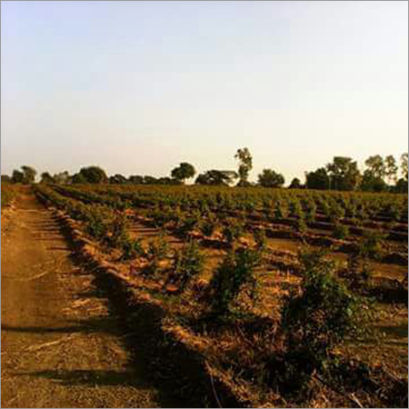 Organic Contract Farming